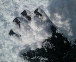 竜王スキーパークの雪の見た目